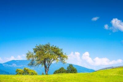 Sticker Apple tree on a hill