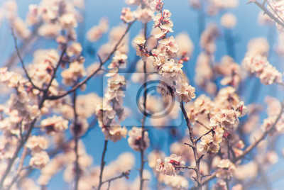 Apricot flowers background