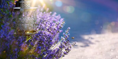 Sticker art Summer or spring beautiful garden with lavender flowers