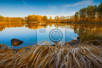Autumn colorful forest on the lake