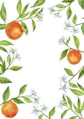Sticker background with fruit tree branches, flowers, leaves and oranges