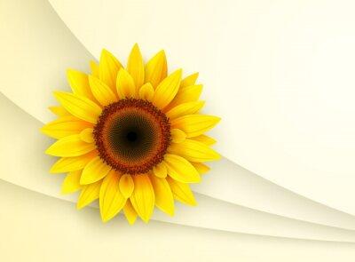 Sticker Background with sunflower,