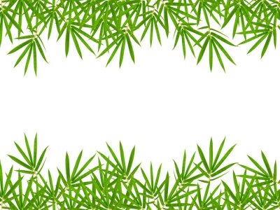 Sticker bamboo leaves isolated on white background