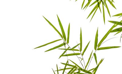 Sticker bamboo leaves isolated on white background, clipping path includ