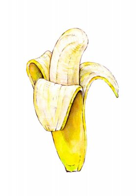 Sticker Banana isolated on white background. Watercolor colourful illustration. Tropical fruit. Handwork