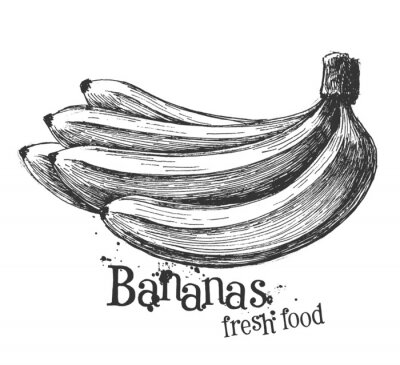 Sticker bananas on a white background. sketch
