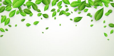 Sticker Banner with green leaves.