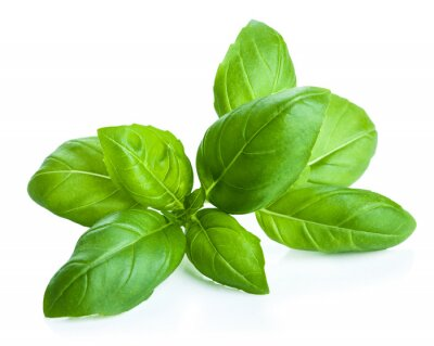 Sticker basil leaves isolated