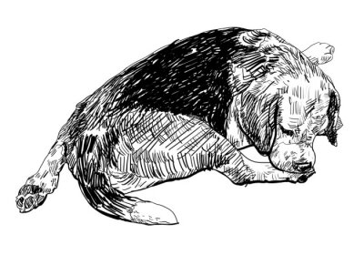 Sticker Beagle is biting softly on it's leg.