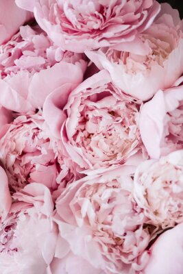 Sticker Beautiful aromatic fresh blossoming tender pink peonies texture, close up view