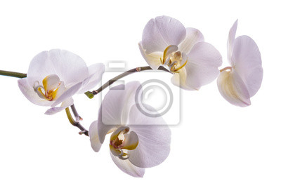 Beautiful flower orchid 4