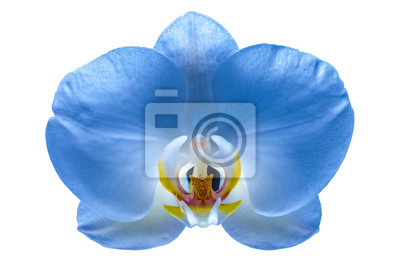 Beautiful flower orchid 6