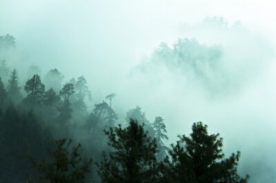 Sticker Beautiful fog in Himalayas forest