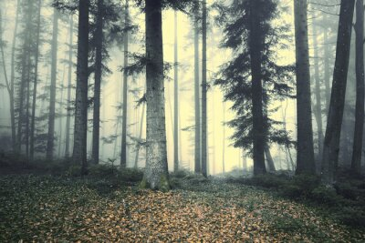 Sticker Beautiful foggy forest tree fairytale. Magic foggy light in forest.
