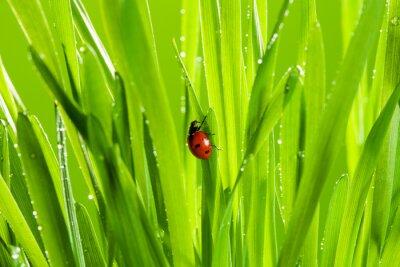 Sticker beautiful ladybug on the green grass