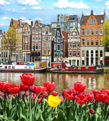 Sticker Beautiful landscape with tulips and houses in Amsterdam, Holland