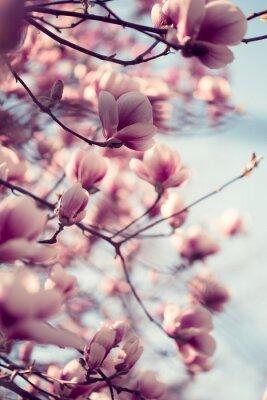 Sticker Beautiful pink magnolia flowers