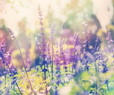Sticker beautiful summer background, lavender field, close up