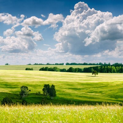 beautiful summer landscape..