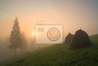 Beauty summer foggy image