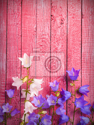 bell flowers on a pink background