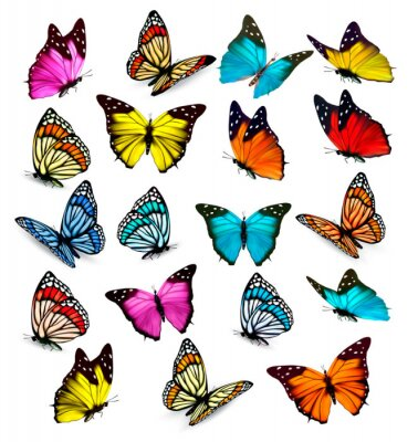 Sticker Big collection of colorful butterflies. Vector
