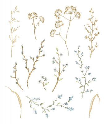 Sticker Big set with dry herbs, willow branches and twigs with flowers and berries isolated on white background. Watercolor hand drawn illustration
