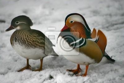 Sticker bird 17