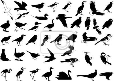 Sticker bird