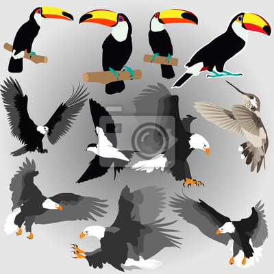 Sticker birds