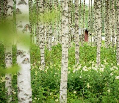 Sticker Birken in Finnland