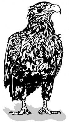 Sticker Black and White Eagle - Outlined Illustration, Vector