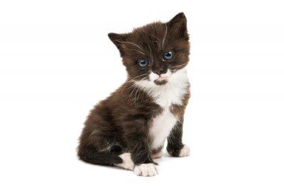 Sticker black and white kitten isolated