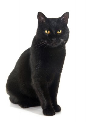 Sticker black cat