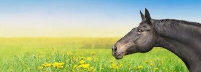 Sticker Black Horse on summer background with dandelion, banner