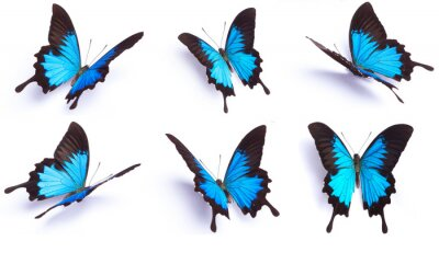 Sticker Blue and colorful butterfly on white background