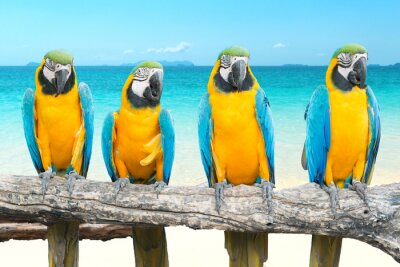 Sticker Blue and Gold Macaw on tropical beautiful beach and sea