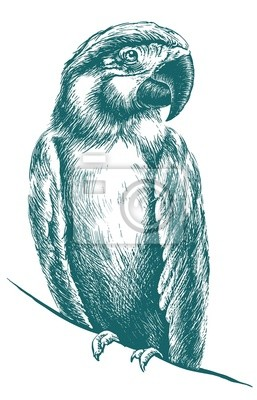 Sticker Blue parrot vector sketch