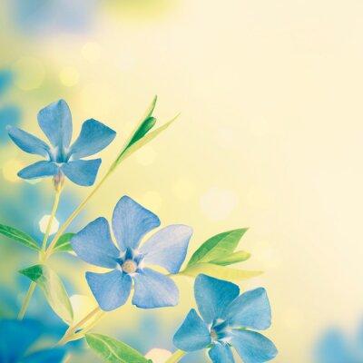 Blue spring flowers background_5