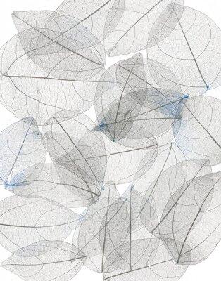 Sticker blue transparent leaves, beautiful decorative background.Bright expressive artistic image nature