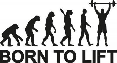 Sticker Born to lift weightlifter evolution