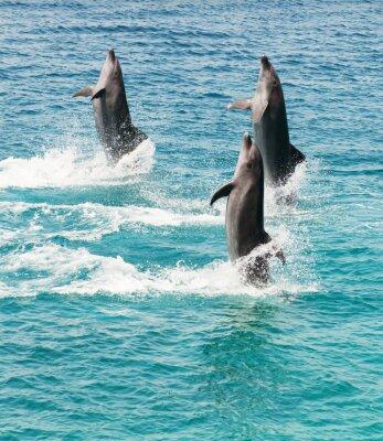 Sticker bottlenose dolphins