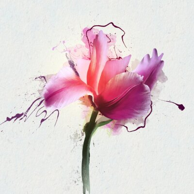 Sticker Bright beautiful Tulip on a white background. A genus of perennial herbaceous bulbous plants of the Lily family