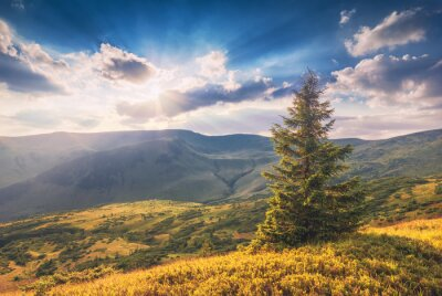 Bright morning in a Carpathian valley