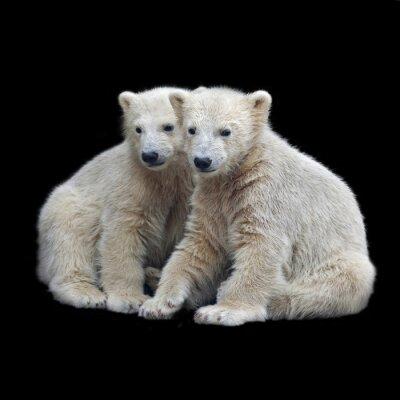 Sticker Brotherhood of polar bear cubs