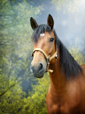 Sticker Brown horse in spring landscape