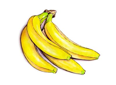 Sticker Bunch of bananas isolated on white background. Watercolor illustration. Tropical fruit