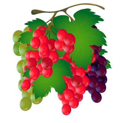 Sticker Bunch of grapes with a leaf on a white background