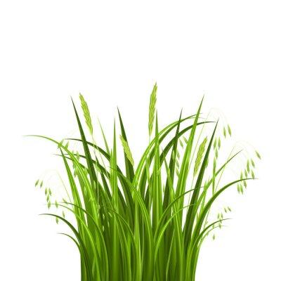 Sticker Bush grass isolated on white background