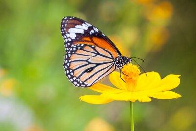 Sticker Butterflies and Flowers